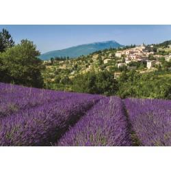 Provence, Aurel