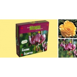 Mémo : les fleurs et plantes